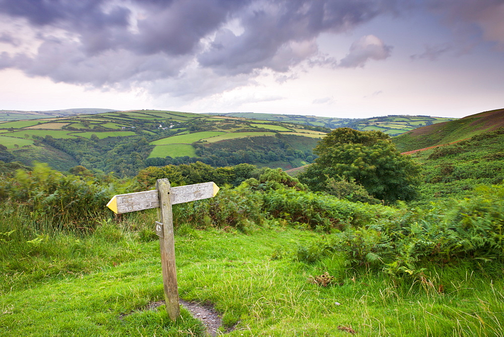 Footpath on Trentishoe down in Exmoor National Park, Devon, England, United Kingdom, Europe
