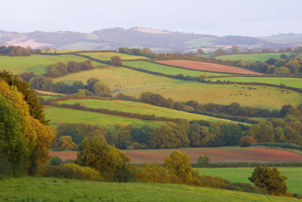 Patchwork fields in countryside near Crediton, Devon, England, United Kingdom, Europe