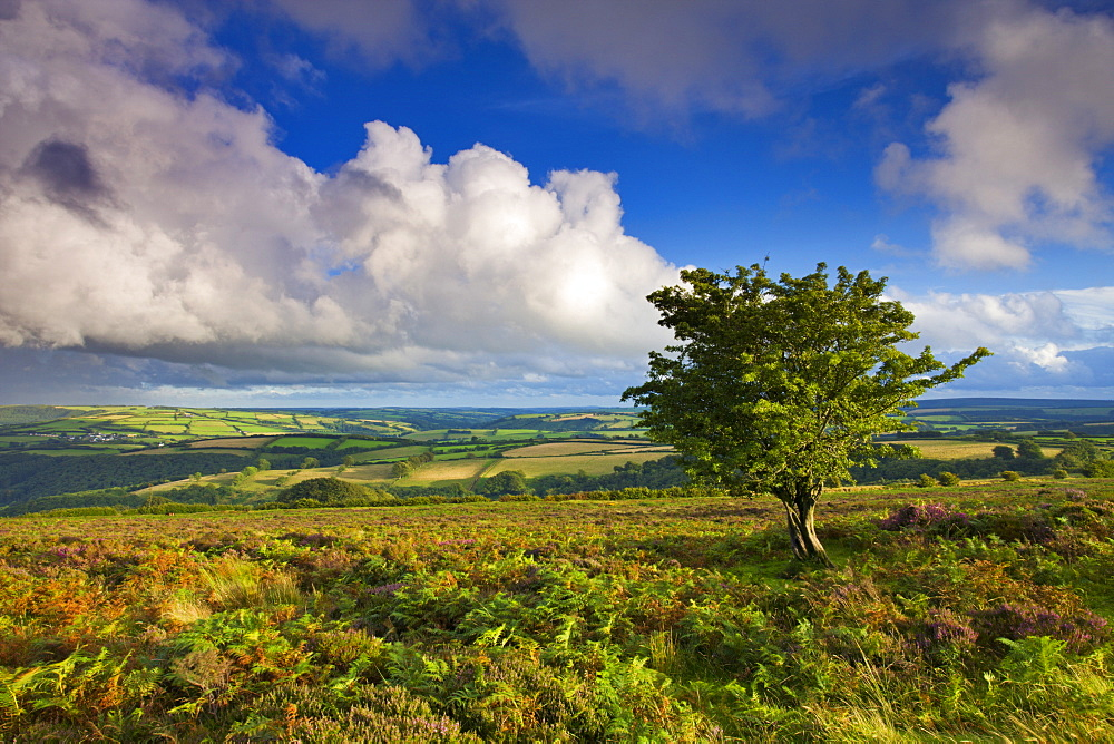 Views from Dunkery Hill on a blustery summer's day, Exmoor National Park, Somerset, England, United Kingdom, Europe