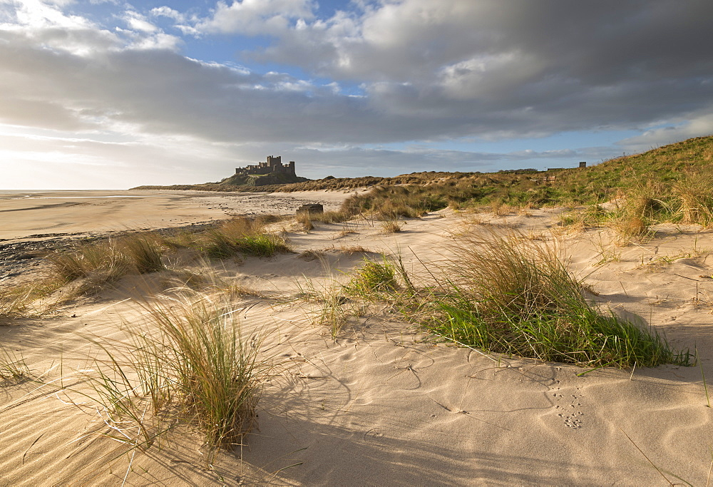 Sand dunes above Bamburgh Beach, with Bamburgh Castle in the background, Northumberland, England, United Kingdom, Europe
