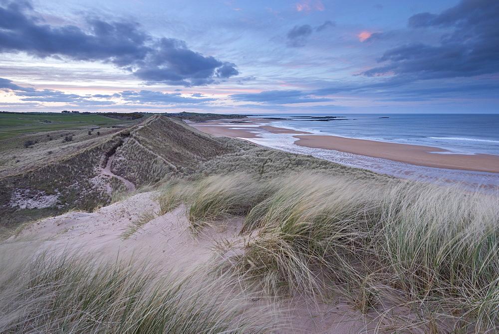 Sand dunes above Embleton Beach during twilight, Northumberland, England, United Kingdom, Europe
