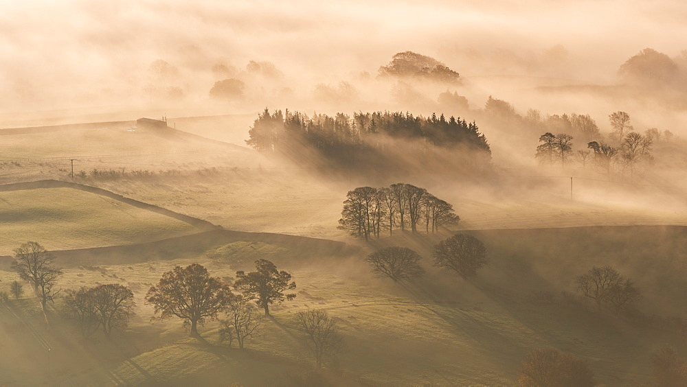 Mist covered rolling countryside at dawn in autumn, Lake District, Cumbria, England, United Kingdom, Europe - 799-2717
