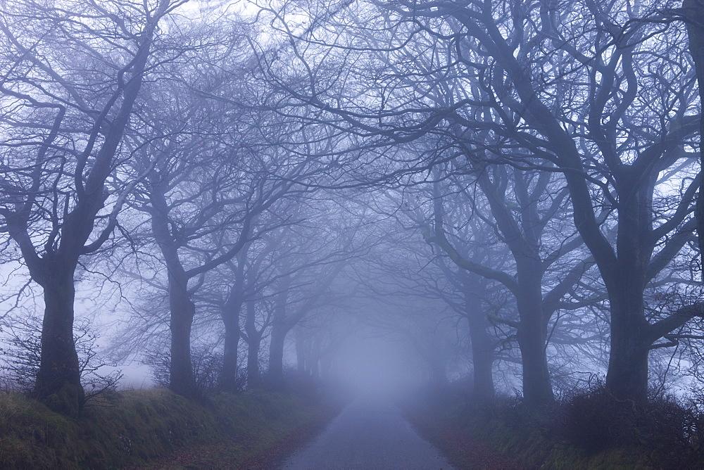 Foggy winter morning along a tree lined lane near Northmoor Common, Exmoor National Park, Somerset, England, United Kingdom, Europe