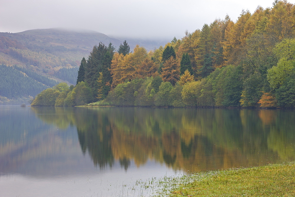 Autumnal foliage on the banks of Talybont Reservoir on a misty morning, Brecon Beacons, Powys, Wales, United Kingdom, Europe