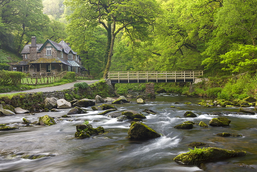 Spring foliage surrounds Watersmeet House next to the East Lyn River at Watersmeet, Exmoor National Park, Devon, England, United Kingdom, Europe