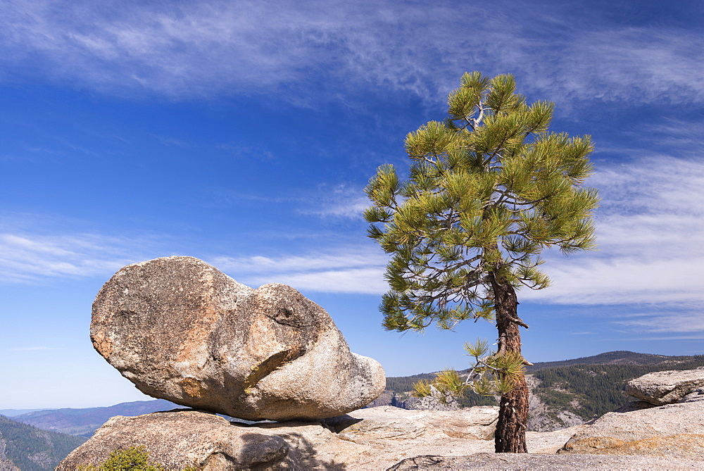 Lone pine tree and boulder on Taft Point above Yosemite Valley, UNESCO World Heritage Site, California, United States of America, North America