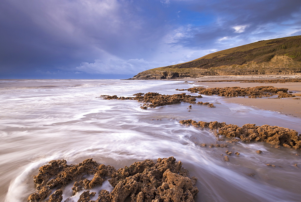 Honeycombe Worm reefs on the shore near Dunraven Bay, Glamorgan Heritage Coast, South Wales, Wales, United Kingdom, Europe