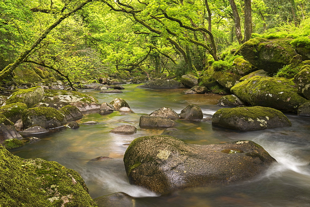 River Plym flowing through Dewerstone Wood in Dartmoor, Devon, England, United Kingdom, Europe