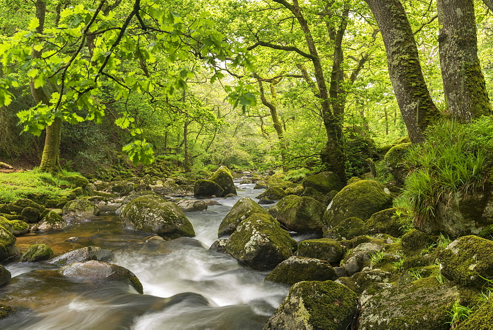 River Plym flowing through Dewerstone Wood, Dartmoor, Devon, England, United Kingdom, Europe