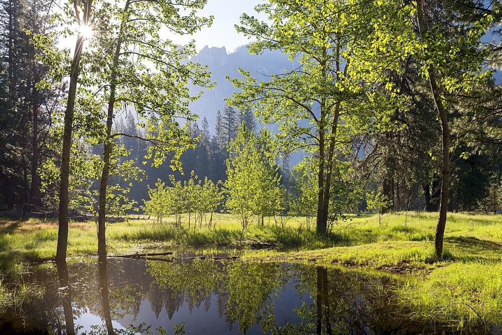 Early morning sunshine shines through spring trees, Yosemite Valley, California, USA. Spring (June) 2016.