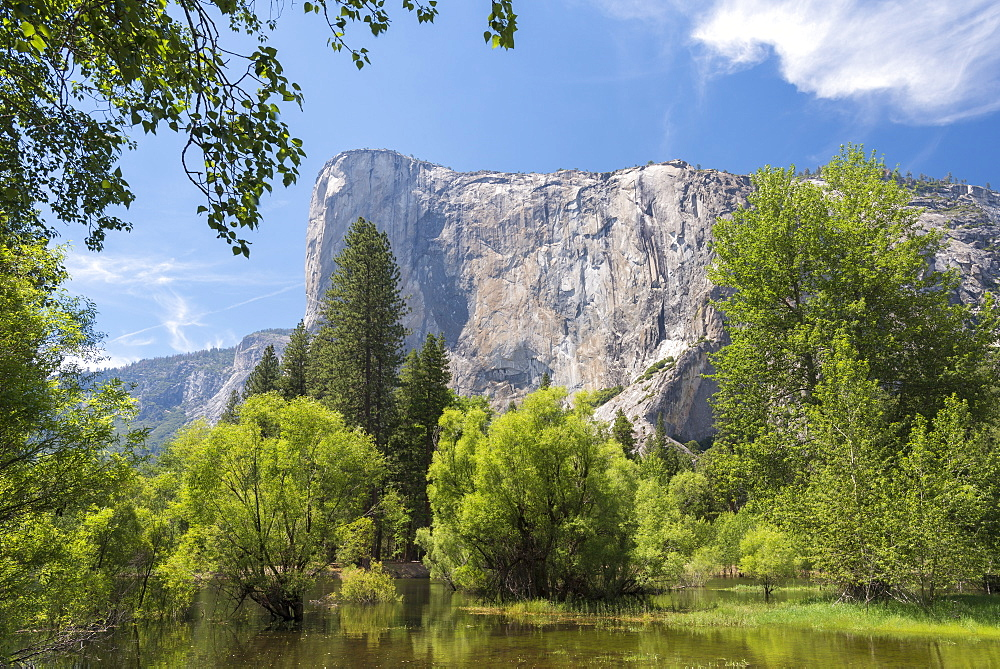 El Capitan rising above the spring foliage of Yosemite Valley, UNESCO World Heritage Site, California, United States of America, North America