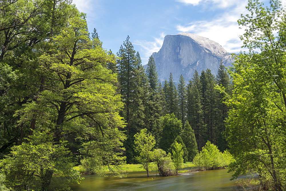 Half Dome mountain above the River Merced in springtime, Yosemite Valley, UNESCO World Heritage Site, California, United States of America, North America