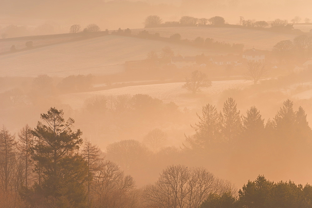 Mist covered rolling countryside and trees at dawn, Throwleigh, Dartmoor National Park, Devon, England, United Kingdom, Europe