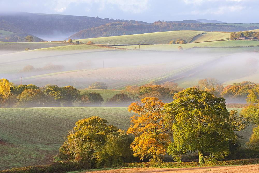 Mist covered rolling farmland, Near Cheriton Bishop, Devon, England. Autumn (October) 2015.