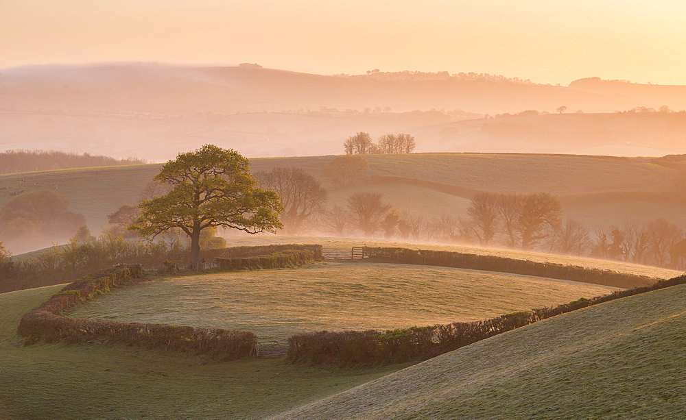 Misty morning over rolling countryside near Crediton, Devon, England, United Kingdom, Europe