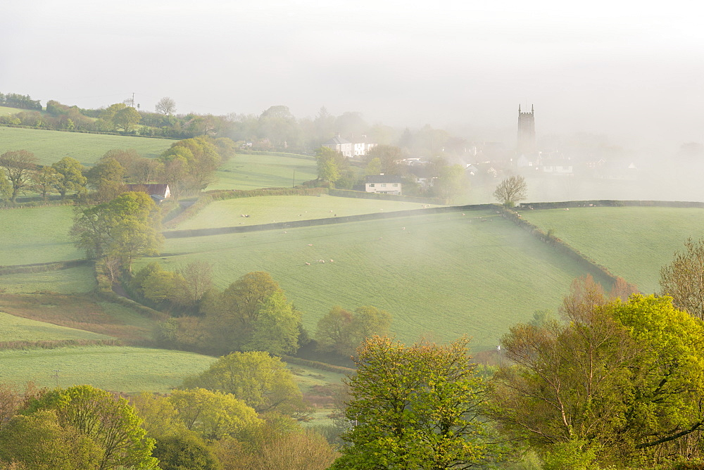 Mist covered countryside at dawn near the village of South Tawton, Devon, England, United Kingdom, Europe