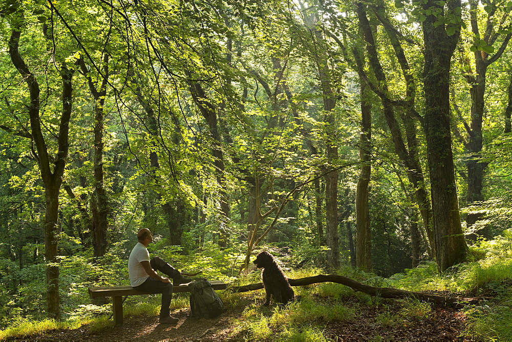 Man resting on a bench with dog in a verdant deciduous woodland in summertime, Dartmoor, Devon, England, United Kingdom, Europe - 799-3404