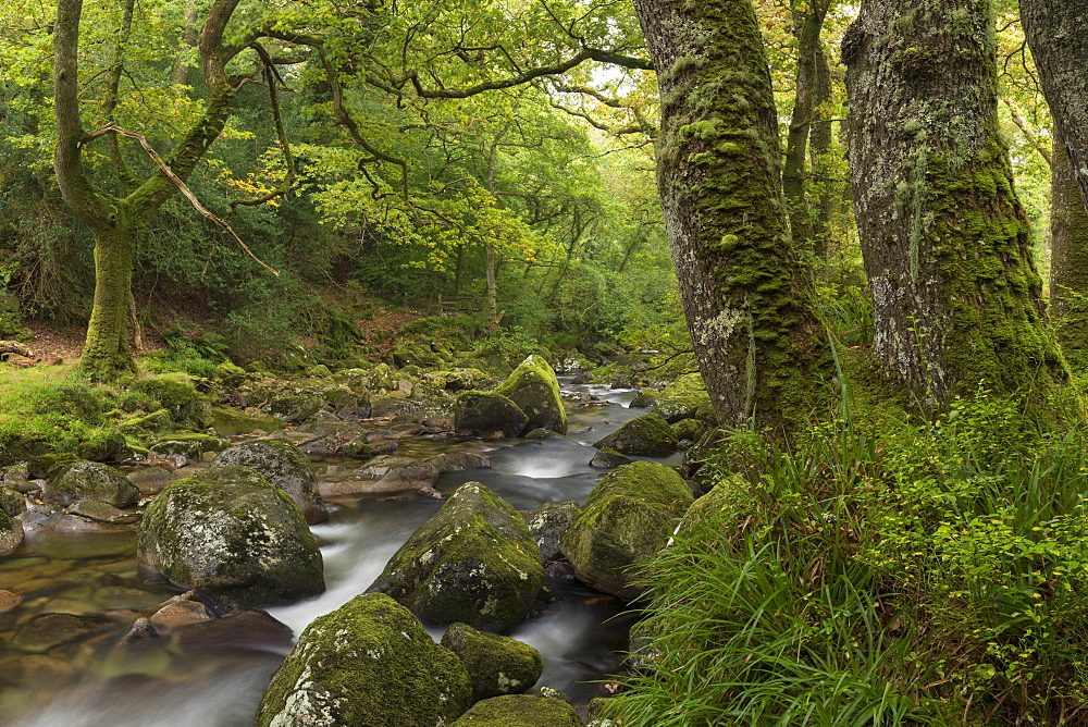 River Plym babbling through the verdant Dewerstone Wood, Dartmoor, Devon, England, United Kingdom, Europe