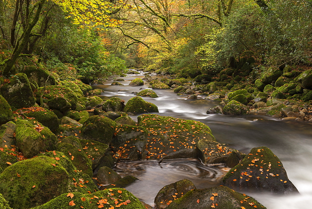 Autumn foliage surrounding the River Plym in Dartmoor National Park, Devon, England, United Kingdom, Europe