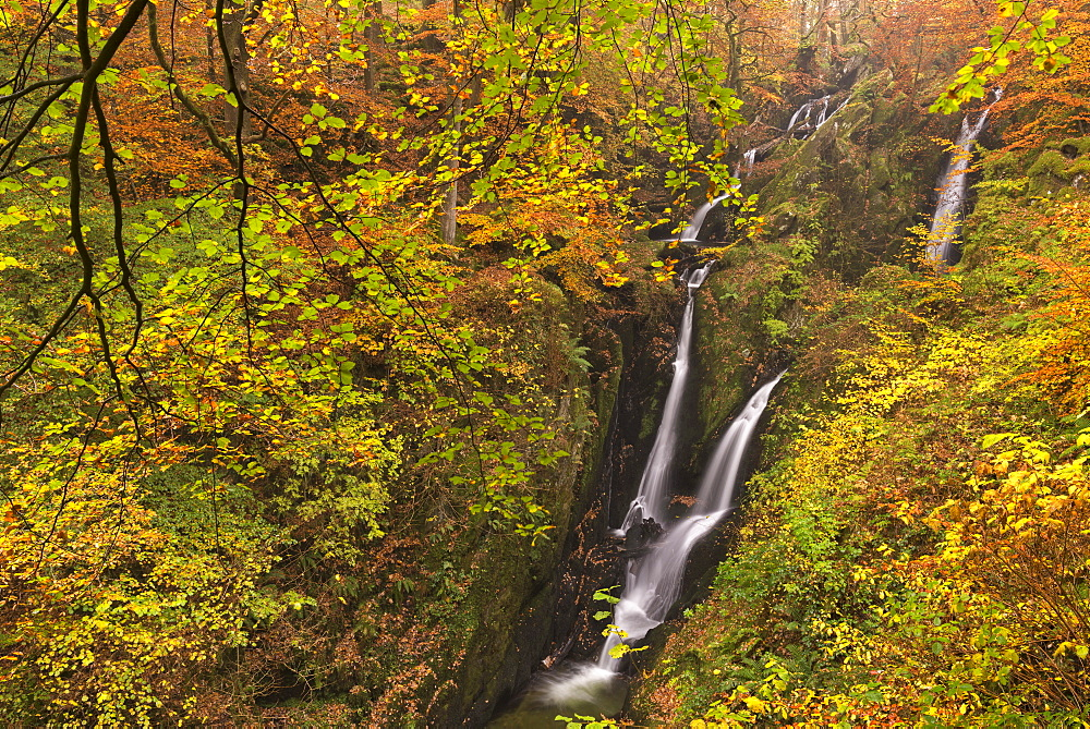 Stock Ghyll Force waterfall cascading down through autumnal deciduous woodland, Ambleside, Lake District, Cumbria, England, United Kingdom, Europe - 799-3425