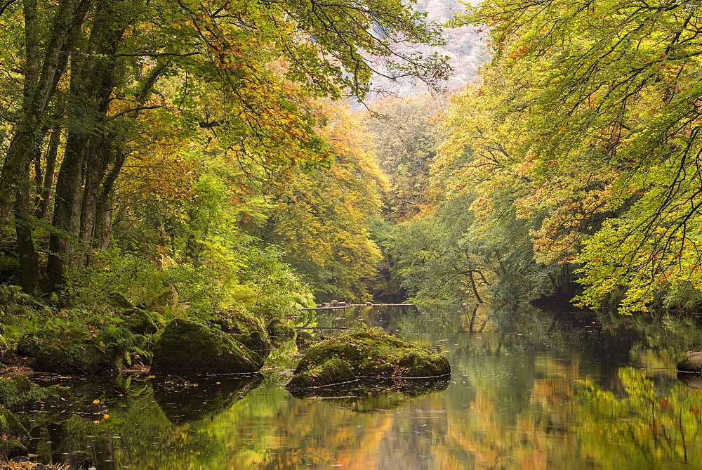 Autumnal trees overhanging the River Teign in Dartmoor, Devon, England, United Kingdom, Europe - 799-3431