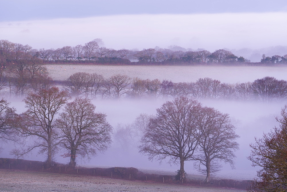 Mist and trees in rural farmland, South Tawton, Devon, England, United Kingdom, Europe - 799-3442