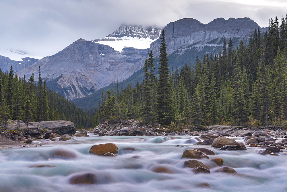 Surrounded by forest and mountains the fast flowing Mistaya River runs alongside the Icefields Parkway in the Canadian Rockies, Alberta, Canada, North America - 799-3462
