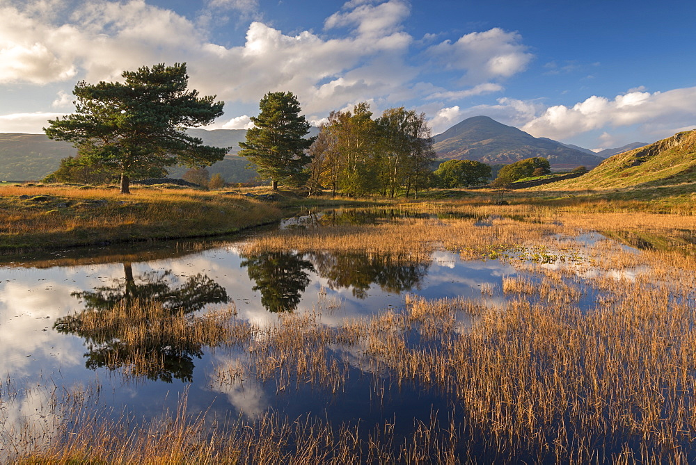Kelly Hall Tarn and the Coniston Old Man, Lake District National Park, Cumbria, England, United Kingdom, Europe - 799-3469