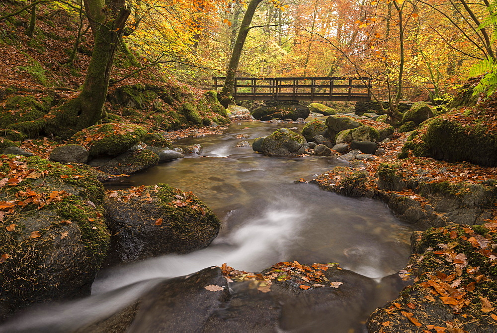 Rushing river through autumnal deciduous woodland, Stockghyll Force, Ambleside, Lake District, Cumbria, England, United Kingdom, Europe