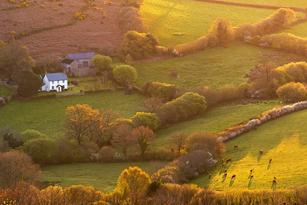 Rural cottage in idyllic countryside surroundings, Dartmoor National Park, Devon, England, United Kingdom, Europe