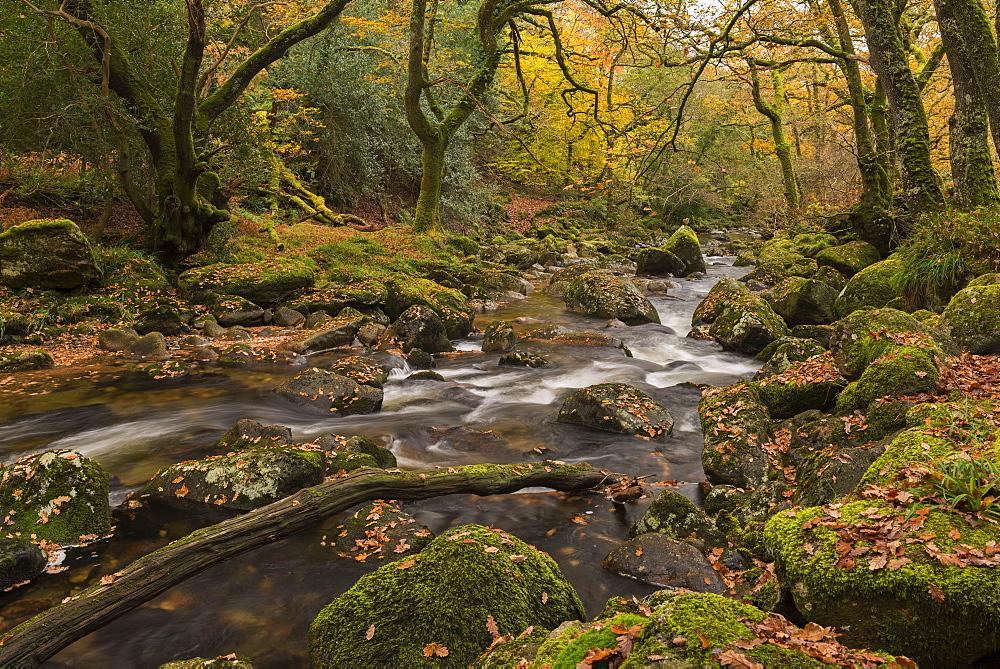 River Plym babbling between rocks in Dewerstone Wood, Shaugh Prior, Dartmoor, Devon, England, United Kingdom, Europe