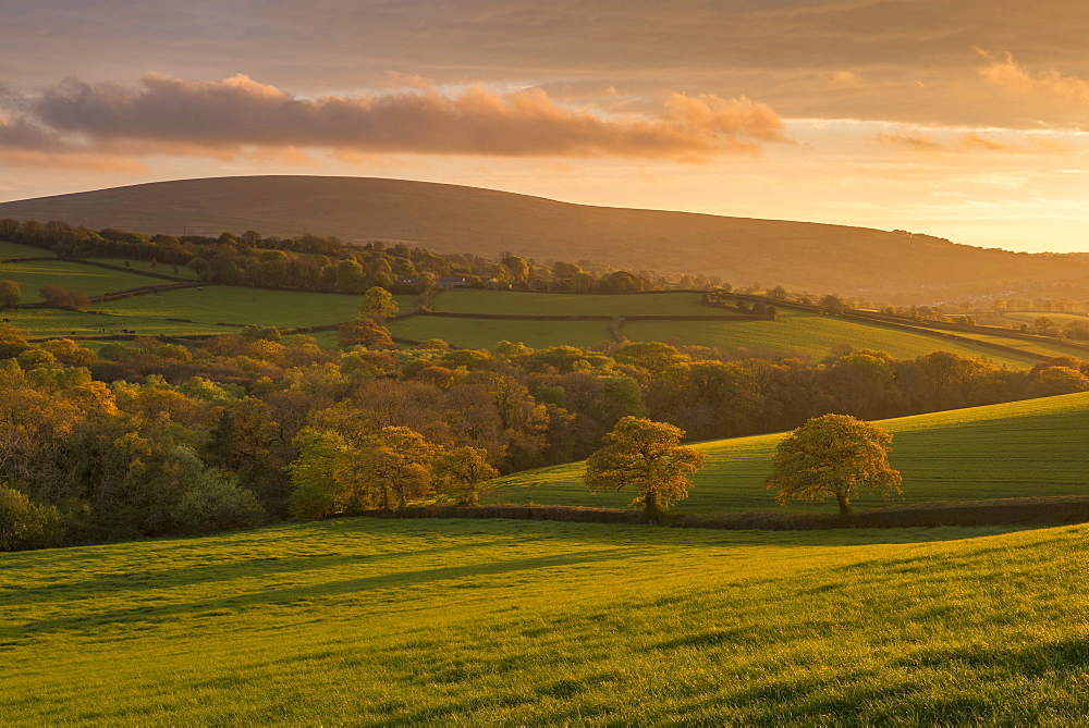 Gorgeous evening sunlight illuminates the spring trees and fields of South Tawton, Dartmoor, Devon, England, United Kingdom, Europe - 799-3569