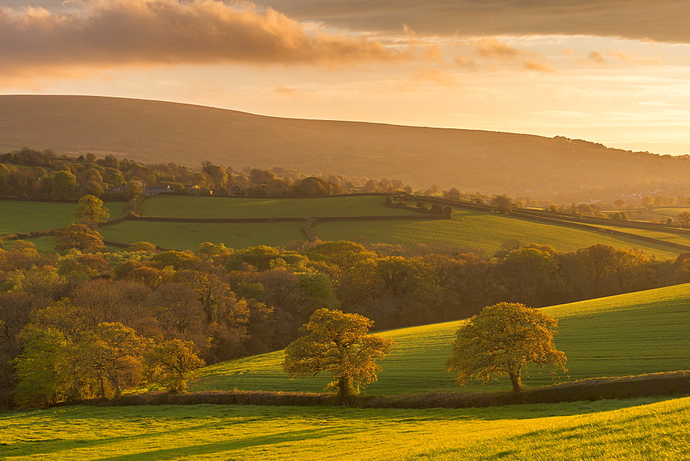 Rich evening spring sunshine bathes the rolling Devon countryside in golden light, Dartmoor, Devon, England, United Kingdom, Europe