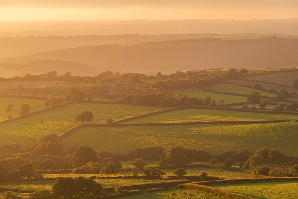 Rolling Dartmoor countryside on a summer evening, near Brentor, Devon, England, United Kingdom, Europe - 799-3578