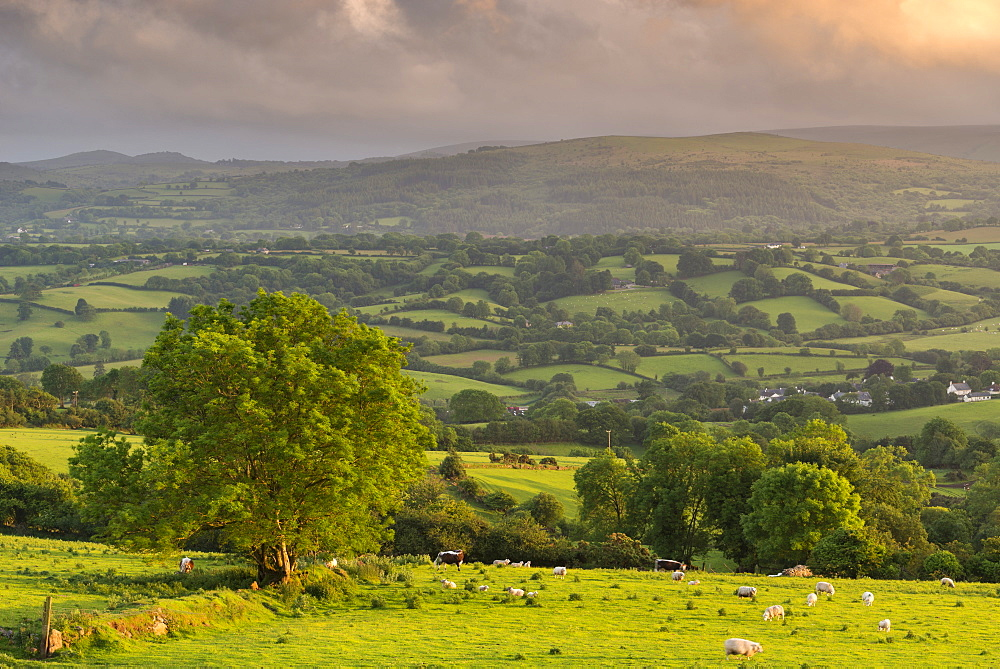 Rolling Devon countryside on a summer evening, Dartmoor, Devon, England, United Kingdom, Europe