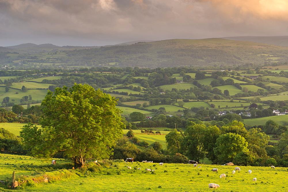 Rolling Devon countryside on a summer evening, Dartmoor, Devon, England. Summer (June) 2017.