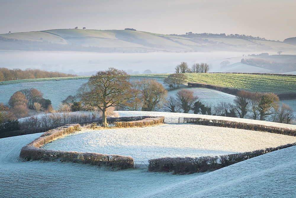Frost covered countryside near Crediton, Mid Devon, England, United Kingdom, Europe