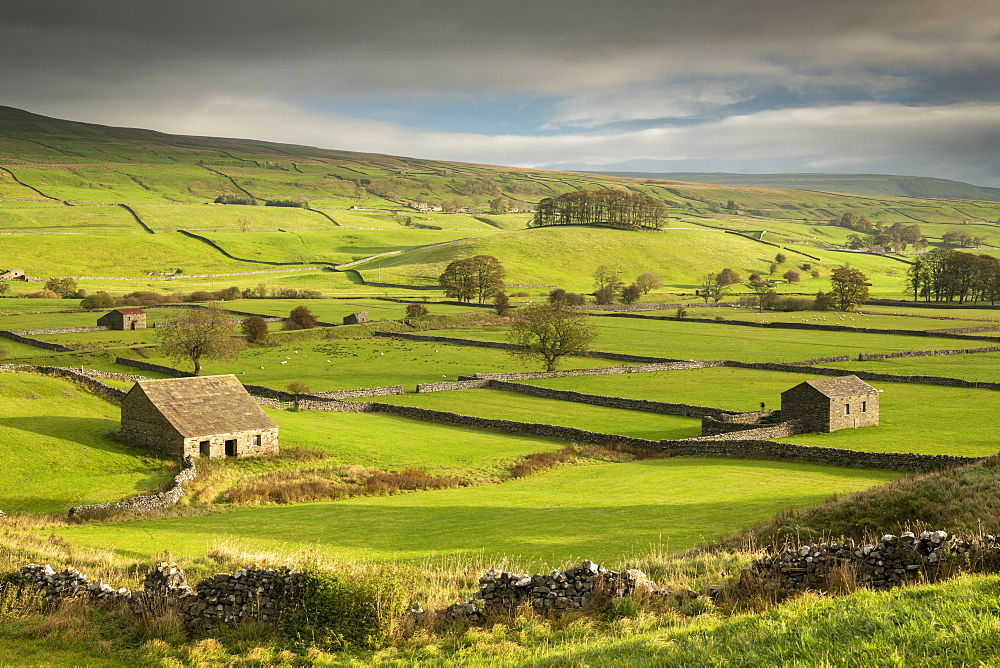 Stone barns and dry stone walls in the rolling countryside of Wensleydale near Hawes, Yorkshire Dales, England. Autumn (October) 2018.