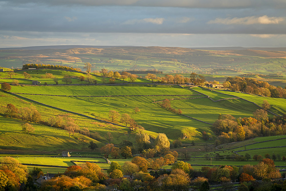 Rolling countryside near Malham in autumn, Yorkshire Dales National Park, Yorkshire, England, United Kingdom, Europe - 799-3745