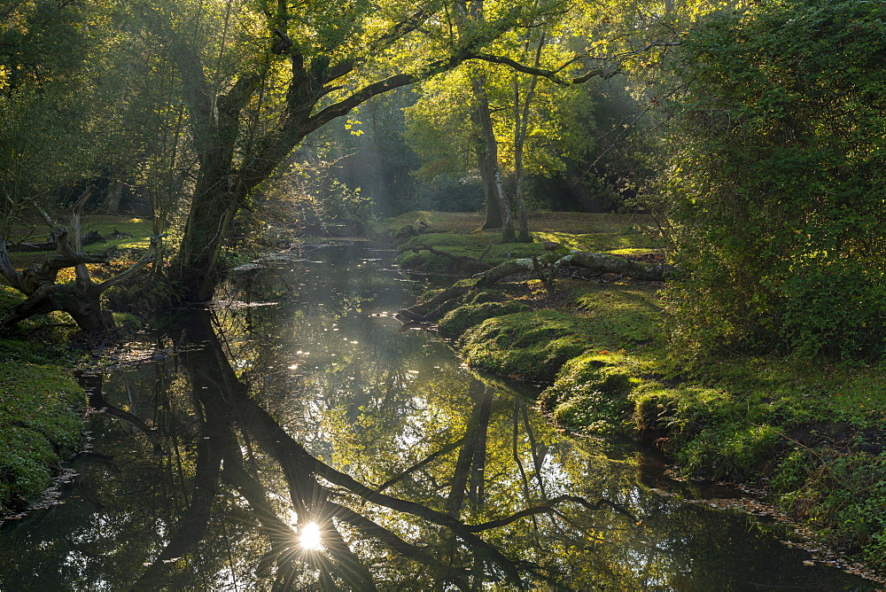 Early morning sunshine reflects in the Beaulieu River, New Forest National Park, Hampshire, England, United Kingdom, Europe