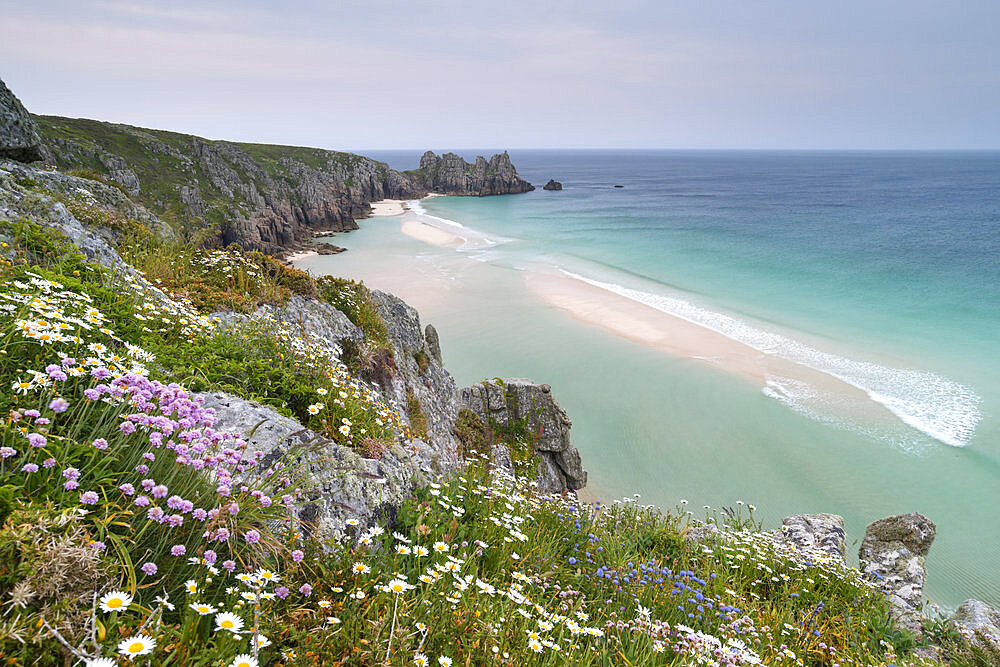 Wildflowers in spring on the cliffs above Pednvounder Beach and Logan Rock, Cornwall, England, United Kingdom, Europe