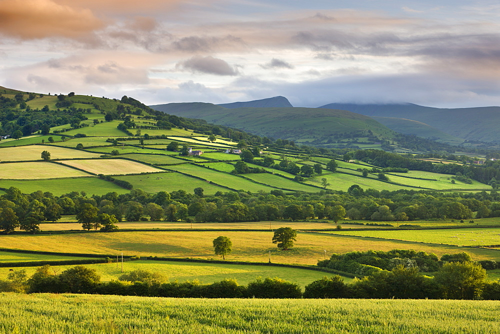 Rolling summer farmland in the Usk Valley backed by Pen y Fan and Cribyn mountains, Brecon Beacons National Park, Powys, Wales, United Kingdom, Europe