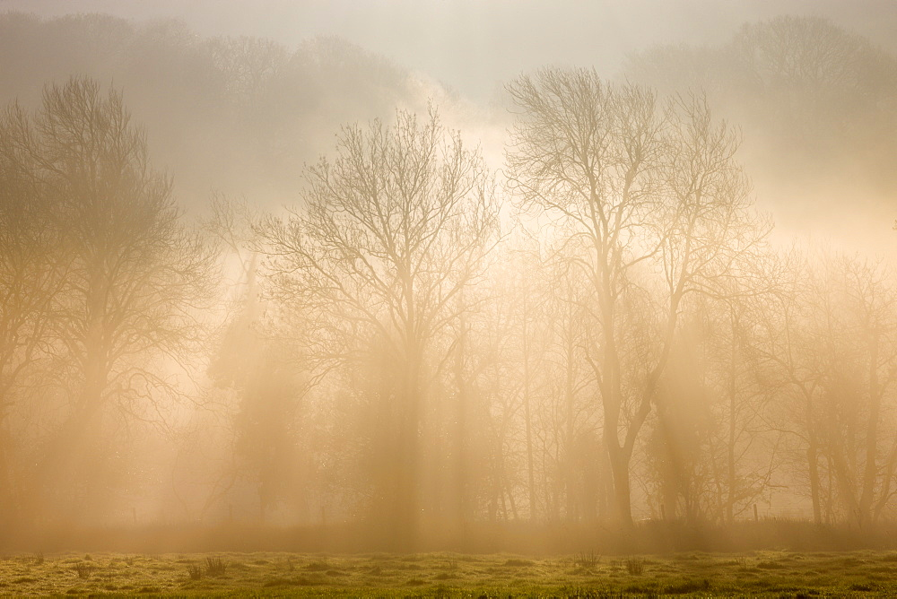 Mist and early morning sunlight shine through deciduous trees in the hedgerow of a rural field in winter, Okehampton, Devon, England, United Kingdom, Europe