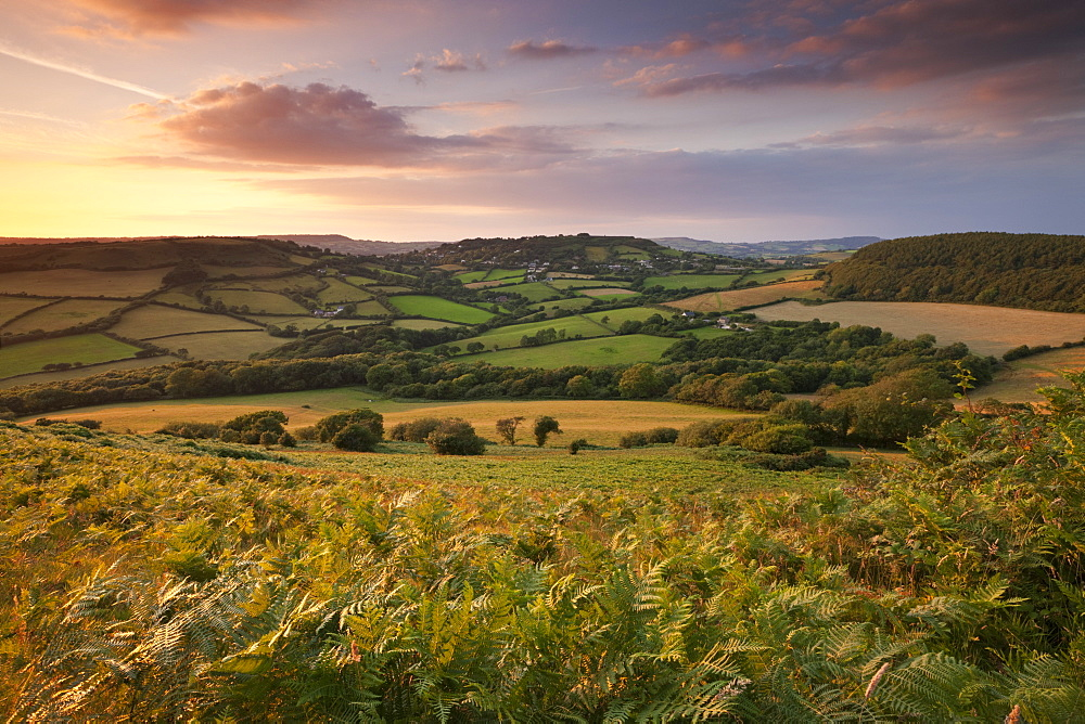 Rolling Dorset countryside viewed from Golden Cap, Dorset, England, United Kingdom, Europe