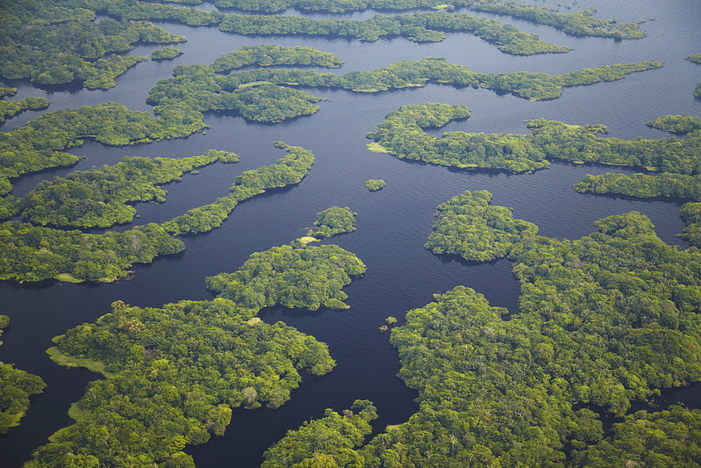 Aerial view of Amazon rainforest and tributary of the Rio Negro, Manaus, Amazonas, Brazil, South America  - 800-1086