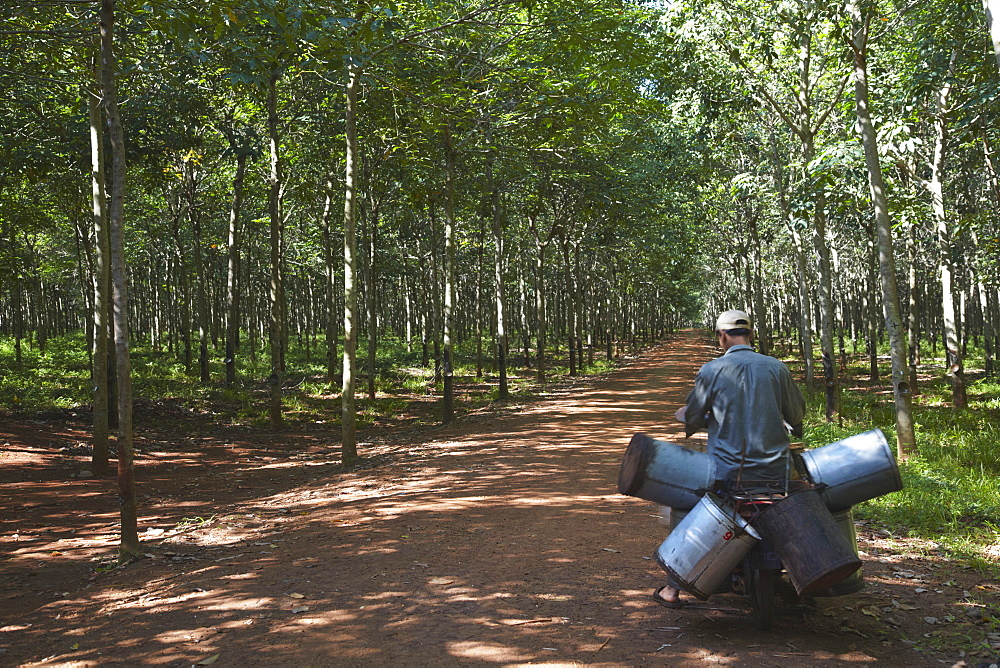 Rubber worker in rubber plantation, Kampong Cham, Cambodia, Indochina, Southeast Asia, Asia