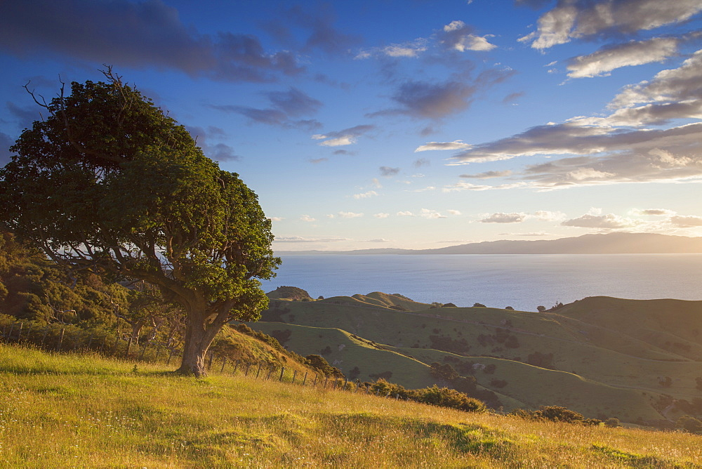 View of Firth of Thames, Coromandel Peninsula, Waikato, North Island, New Zealand, Pacific