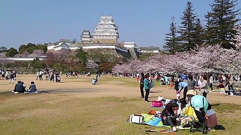 People having picnics at Himeji Castle, Himeji, Honshu, Japan