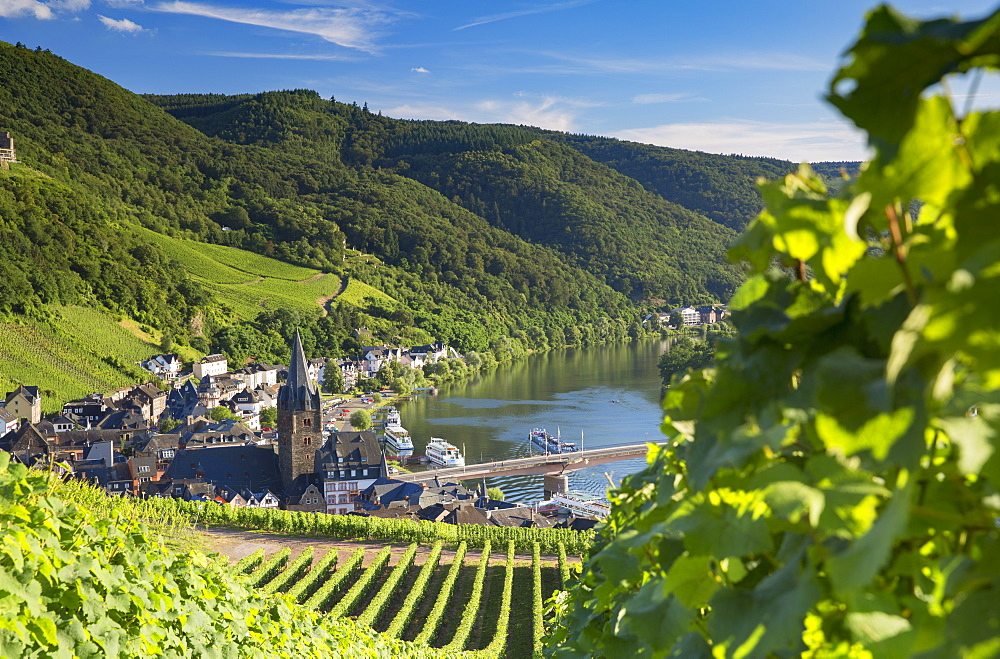 View of vineyards and River Moselle, Bernkastel-Kues, Rhineland-Palatinate, Germany, Europe
