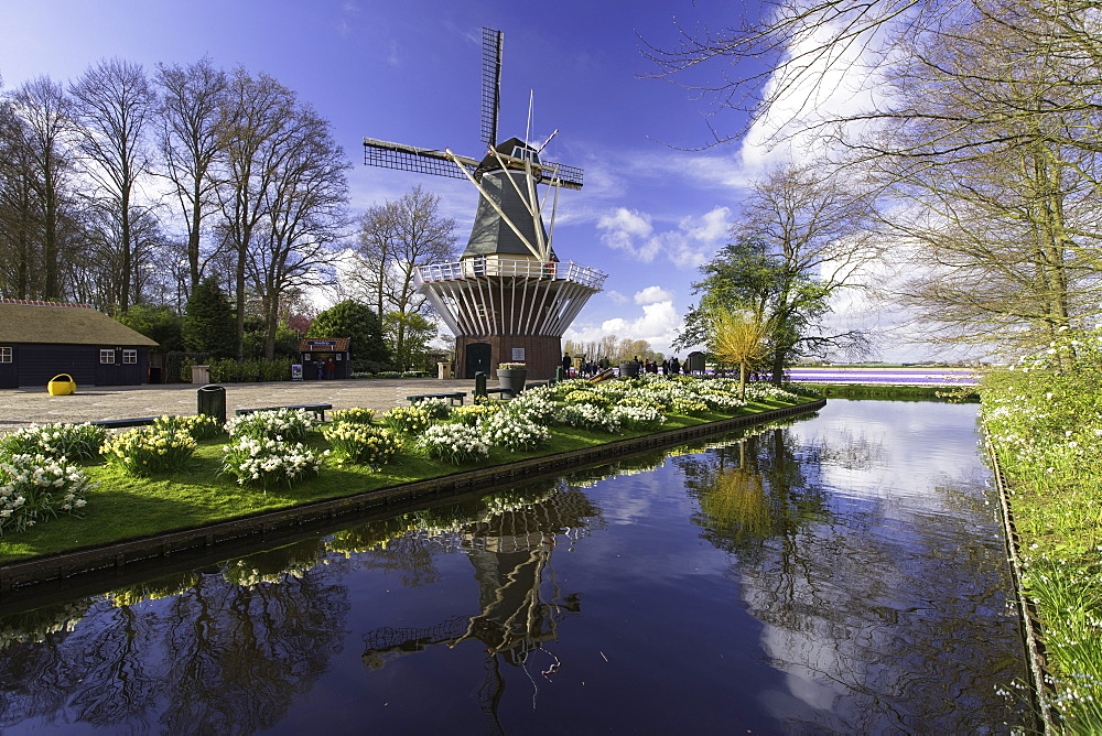 Windmill at Keukenhof Gardens, Lisse, Netherlands, Europe
